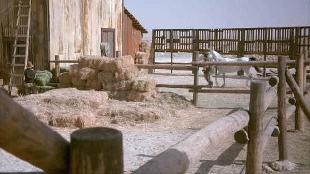 MEDIUM ANGLE OF CORRAL OR WOODEN FENCES SURROUNDING BARN. SEE MAN MOVING HAY FROM HAYSTACKS IN CORRAL. SEE TWO MEN LEAD WHITE HORSE TO BARN DOORS TO ADJUST MUZZLE OR HALTER OR ROPES.