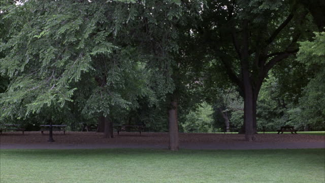 WIDE ANGLE. WOODED AREA IN PARK IN BACKGROUND. OPEN GRASS AREA IN FOREGROUND. TREE BRANCHES OVERHANGING WALKWAY ON LEFT. COULD BE CENTRAL PARK.