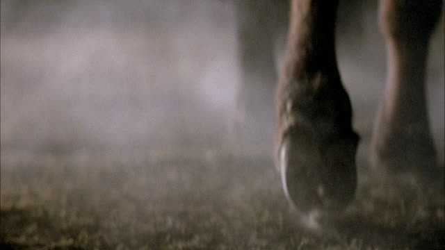 CLOSE ANGLE OF HOOVES AND LEGS FROM FOUR LEGGED ANIMAL, PROBABLY LLAMA, COULD BE COW, HORSE, OR BUFFALO. KICKS UP DUST.