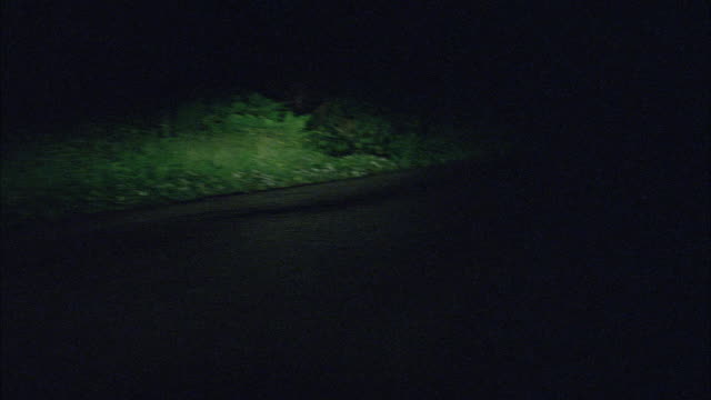 MEDIUM ANGLE MOVING POV DRIVING ALONG COUNTRY ROAD, MAYBE IN FOREST. POSSIBLE ONE HEADLIGHT OUT.