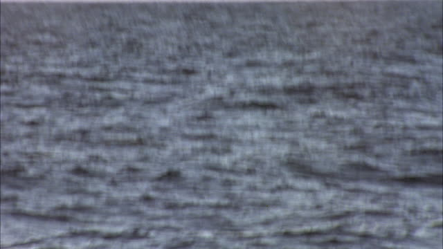 HAND HELD FROM BOAT OF DOLPHIN SWIMMING UP TO OCEAN WATER'S SURFACE NEAR HAWAII. DOLPHIN EMERGES THEN DROPS BACK IN WATER. SEE TWO MORE DOLPHINS SWIM UP THEN DIVE BACK DOWN. CAMERA IS SHAKY ON ANIMALS.