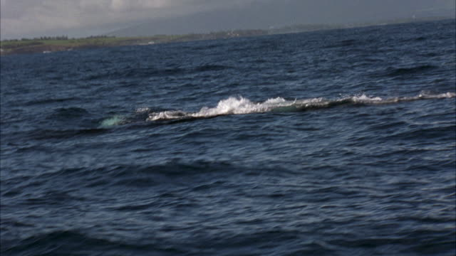 HAND HELD FROM BOAT OF WHALE SWIMMING ALONG OCEAN WATER'S SURFACE NEAR HAWAII COASTLINE. SEE WHALE'S BACK AND DORSAL FIN. WHALE EMERGES THEN DROPS BACK IN WATER AS IT SWIMS RIGHT TO LEFT. SEE WHALES TAIL OR FLUKE SURFACE. CAMERA IS SHAKY ON ANIMAL.