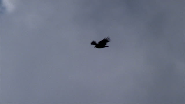 MEDIUM ANGLE TRACKING SHOT OF HAWK FLYING ACROSS SKY TO LEFT. FLIES PAST ROCKY SPIRES OR MOUNTAINS.