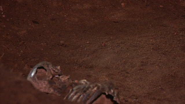 CLOSE ANGLE OF HUMAN SKELETON IN DIRT GRAVE. SEE PART OF SKULL AND BONES FROM DEAD BODY. DEATH. SLIGHTLY OUT OF FOCUS.