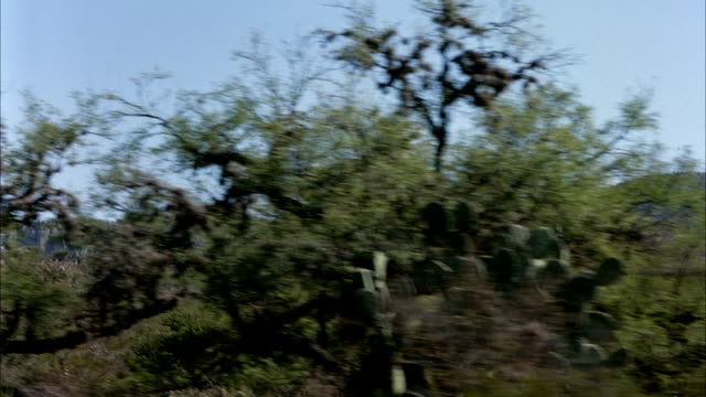 PROCESS PLATE FOR TRAIN OR CAR OF MEXICO DESERT LANDSCAPE FROM LEFT WINDOW POV. HILLS WITH STEEP ROCKY FORMATIONS IN DISTANCE. SEE CACTUS, SHRUBS, BUSHES, AND SMALL TREES. ROCKS AND DIRT BETWEEN VEGETATION. 48FPS. TRIMMED CLIP FROM 2859-028.