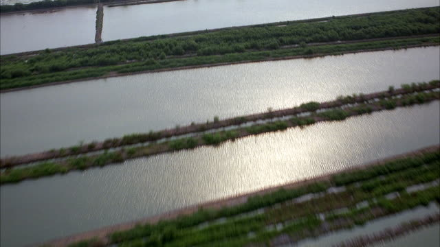 AERIAL OF IRRIGATED SQUARE FLOODED PLAINS. SEE GREEN TREES LINING SQUARES OF WATER. POSSIBLE MARSHES.