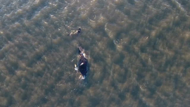 //wwwnbcnewyorkcom/news/local/WhaleMorichesBayEuthanizedNYLongIslandWaterNYC402729596html