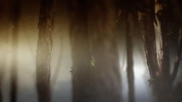 CEDAR TREES - HD LOOP