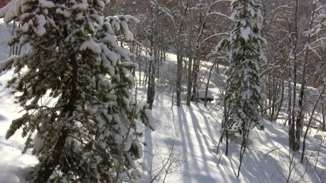 HD 1080 i Pine und Aspen Wald mit Schnee