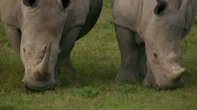 HD 1080i Rhinoceros 4