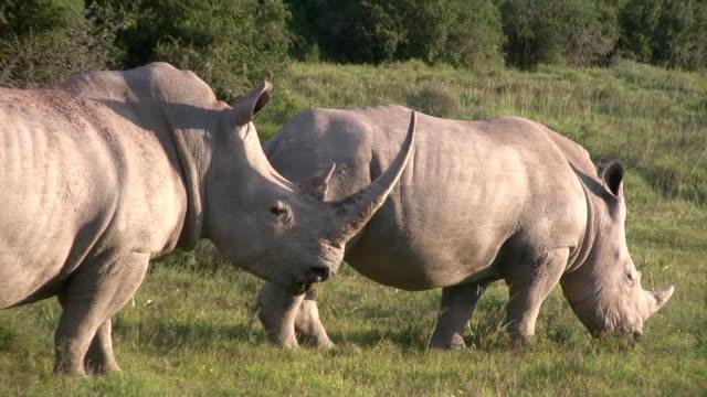 HD 1080i Rhinoceros 6