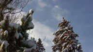 HD 1080i Snow covered Colorado Pine Trees