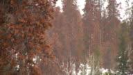 HD 1080 i Schneien in Colorado Forest 2