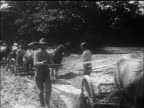 B/W 1910s farmers driving horses pulling plows / documentary