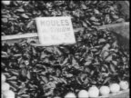 B/W 1920s close up pile of mussels at outdoor fish market / Paris, France / documentary