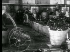 B/W 1920s/30s man wheeling large basket of bottles in champagne cave / workers in background / Reims, France