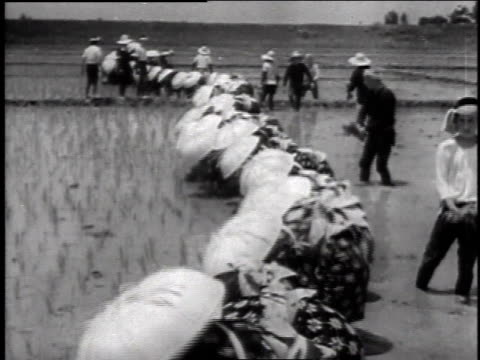 1940s WS workers in straw hats toiling knee deep in mud of rice paddies / Japan