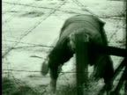 1960s B/W MS PAN Man running and climbing underneath barbed wire fence/ Germany/ AUDIO