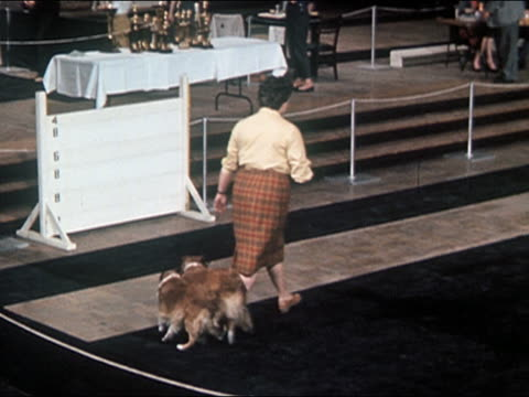 1960s high angle long shot woman walking two border collies at dog show / turning them around and running with them