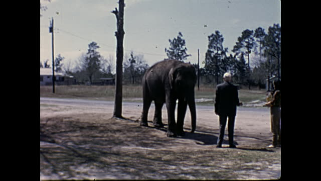 1960s Home Movie - People feeding chained elephant on the side of the road
