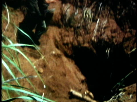 1960s MONTAGE US soldiers dropping explosive into Viet Cong tunnel and running away / Vietnam