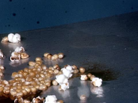 CU 1960s Popcorn kernels popping in hot oil
