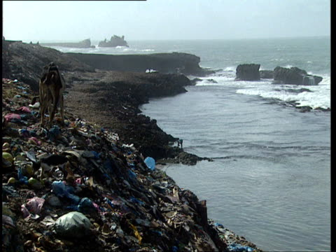 1Oct1998 WS Animals on pile of garbage near Somali coast / Mogadishu Benadir Somalia