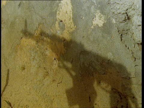 1Oct1998 CU Shadow on wall of machine gun being fired / Mogadishu Benadir Somalia