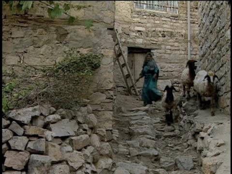 1st Jun 2000 WS LA Local woman herding sheep down alley / Village of Najar, Kurdistan, Iran