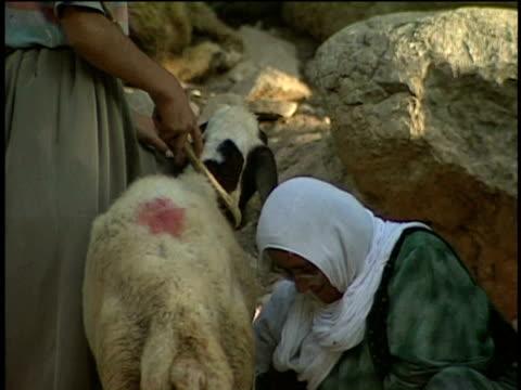 1st Jun 2000 CU TD Woman milking goat in village / Village of Najar, Kurdistan, Iran