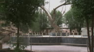 20th Jul 2009 WS Ceremonial tree dedicated to Adam and Eve / Baghdad Iraq