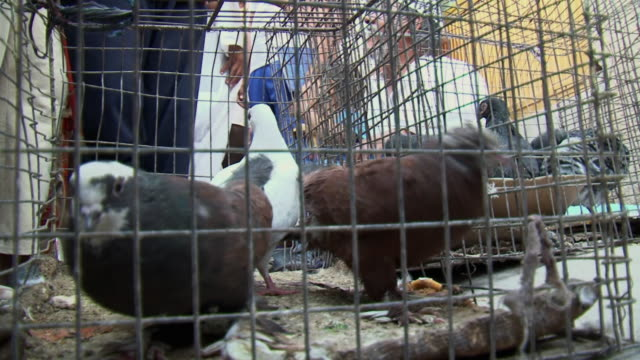 20th Jul 2009 CU LA Pigeons in cage at Souk Al Safaseer market stall / Baghdad Iraq