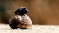 2x Snail macro (1080p)