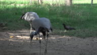 4k: dierlijke vogel in dierentuin