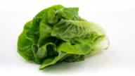 4k: Lettuce on white