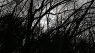4k: Sun shines through tree