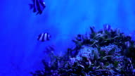 4k video footage of fish swimming in an aquarium