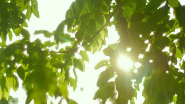 4K:Sunshine Through the tree