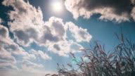 4 K: Zeitraffer des bewölkten Himmel und mit meadow