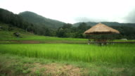 a small pavilion among rice terraced fields