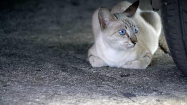 a striped cat sitting under a car.