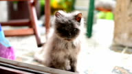 Verlassenen cat