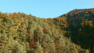 Luftaufnahme über die Baumkronen im Herbst