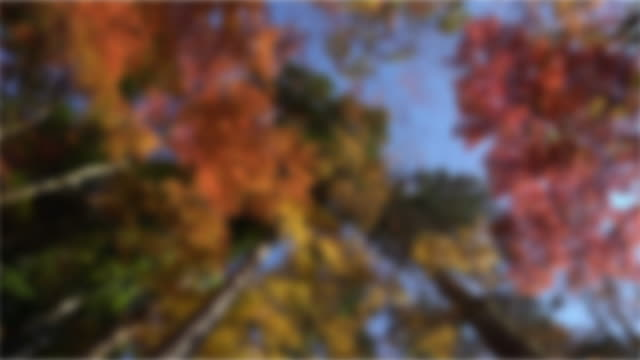 Abstract Blurred: Autumn Red Leave background Korankei Forest park Nagoya