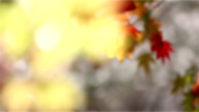 Abstract Blurred background:  Autumn Red Leave Obara Toyota Nagoya Japan