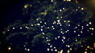 Abstract defocused lights and tree Christmas background