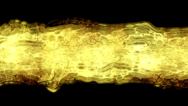 Abstract Fluid Video Background (Loop).