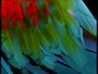 Abstract, very colourful plumage of red and green macaw