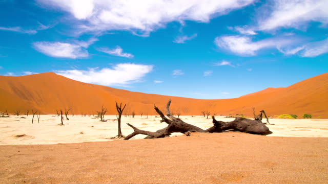 DS WS Acacia Trees In The Dead Vlei