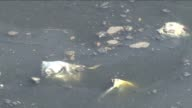 According to the Geneva based NGO Green Cross Argentinas Matanza river known as Riachuelo is one of the ten most polluted sites in the world in 2013...